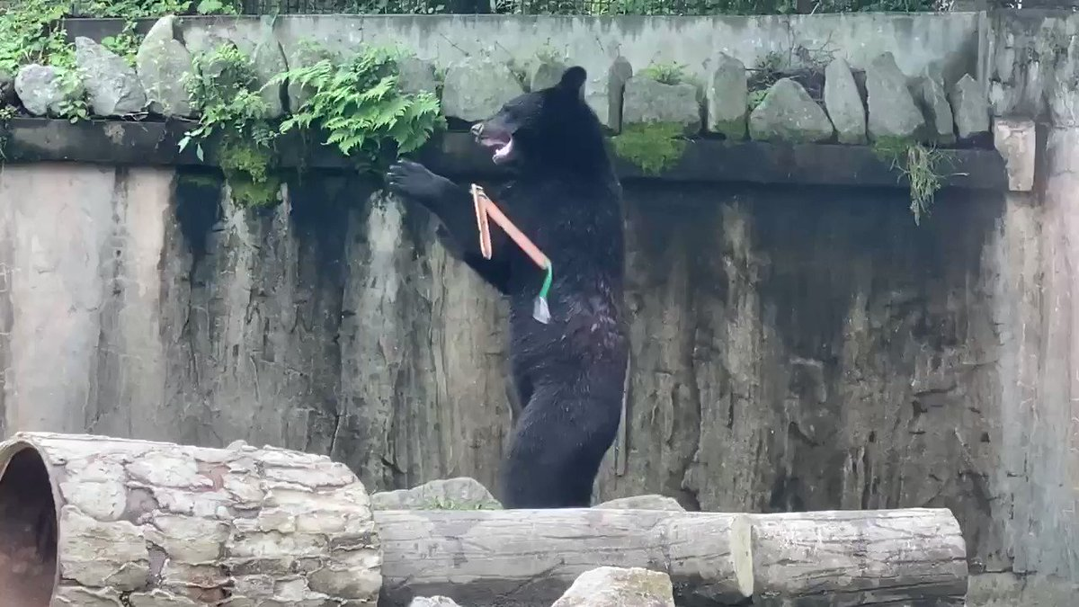 Replying to @KevinRBrackett: We were all worried about Skynet. Meanwhile, nunchuck bears.