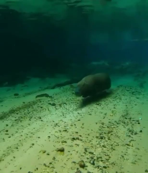 Replying to @BichinhosFB: Que submarino diferente