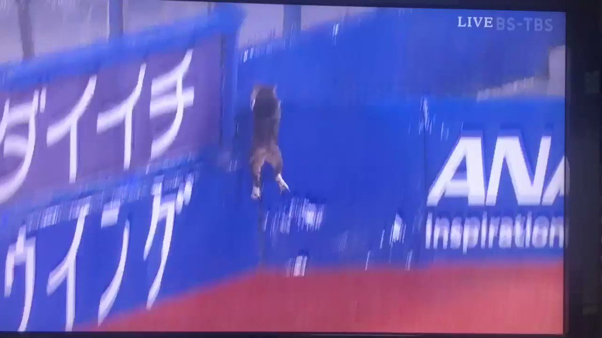 試合終了後のハマスタに猫出現!! 真面目に追いかけるカメラマン、実況、解説。 なんだこれwww #giants #baystars