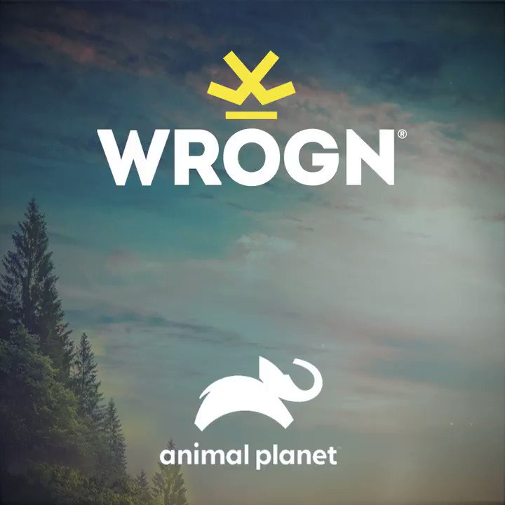 We have joined forces with @AnimalPlanetIn  to bring to your attention to what we are putting our wildlife through.   Our WROGN x ANIMAL PLANET collection drops on 21st July. You can pre-order it now here:  Wear the cause!  #staymad #staywrogn @BWObrands