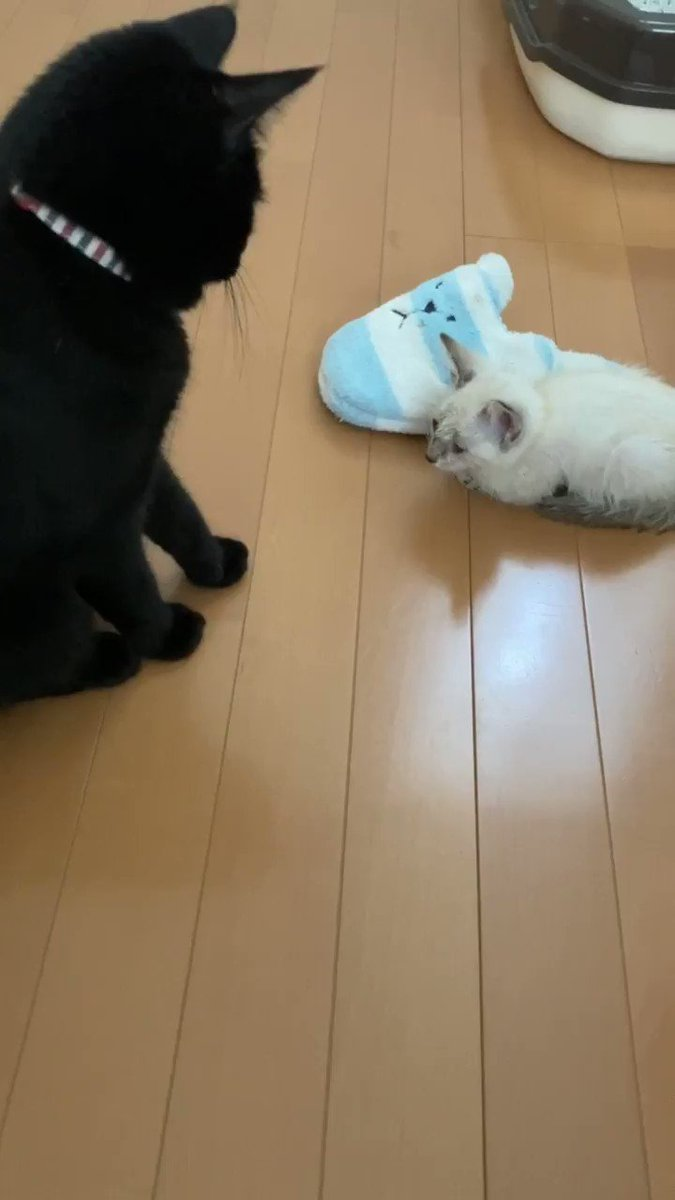 Topics tagged under 貓 on 紀由屋分享坊 4T3pcFLcRV9kKhms