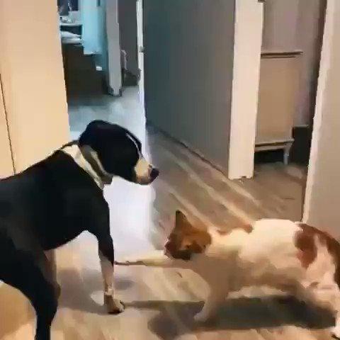 初対面は誰だって緊張する!猫と犬もお互いを確かめ合い仲間か判断