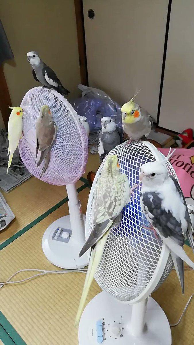 Topics tagged under 鸚鵡 on 紀由屋分享坊 HKjSr7h3YmuDIipA
