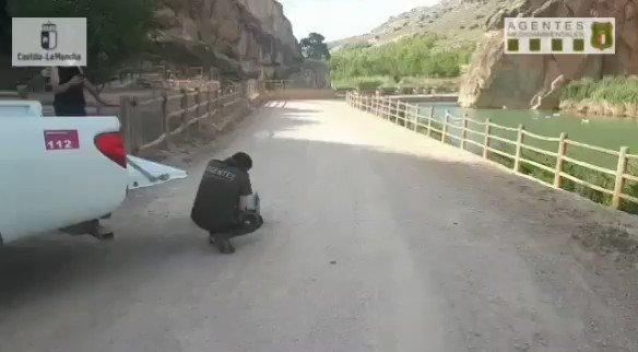 ➡️ Liberada una hembra de halcón peregrino 🦅 en Fuentealbilla (#Albacete)  ✅ Fue rescatada por #AAMM el pasado mes de abril y tras ser atendida en el Centro de Recuperación de Fauna 🏥 ha sido devuelta con éxito al medio natural 🏞 #CLMSostenible                  👇🎥