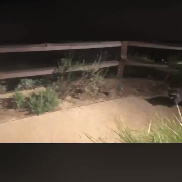 """Crockett the Raccoon's"" friends were caught on video! 🦝💙"