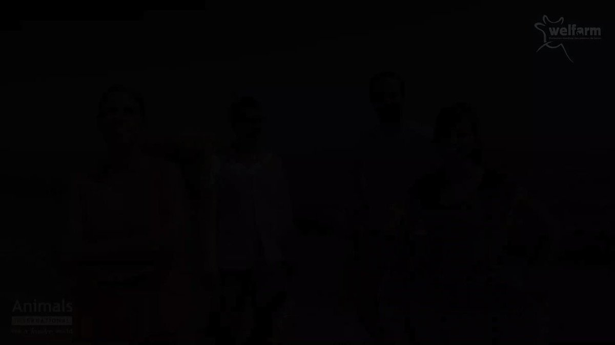 Honteux. Vraiment aucune trêve pour la#SouffranceAnimale ! En pleine#caniculedesanimauxsont entassés dans un cargo en partance du port de@villedesete. Signez notre pétition :https://t.co/mBtwEC0dDV https://t.co/F1AWAw5QbA