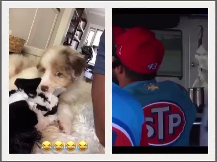 So I noticed something about @BubbaWallace and Amanda's new puppy...😳😂🤘🏼🖤 (Staring puppy video credit to Bubba and staring Bubba video credit to @FOXSports.) #BubbaWallace #NASCAR https://t.co/EfQ8f7m8rP