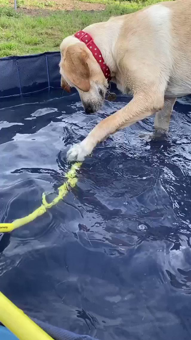 This is Piper. She was having a lovely day playing in the pool until it all went horribly, horribly wrong. Still 13/10