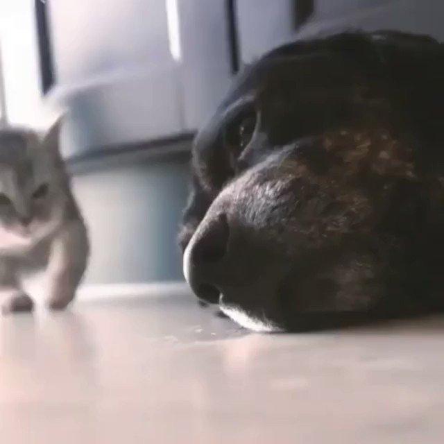 イヌに甘えるネコ
