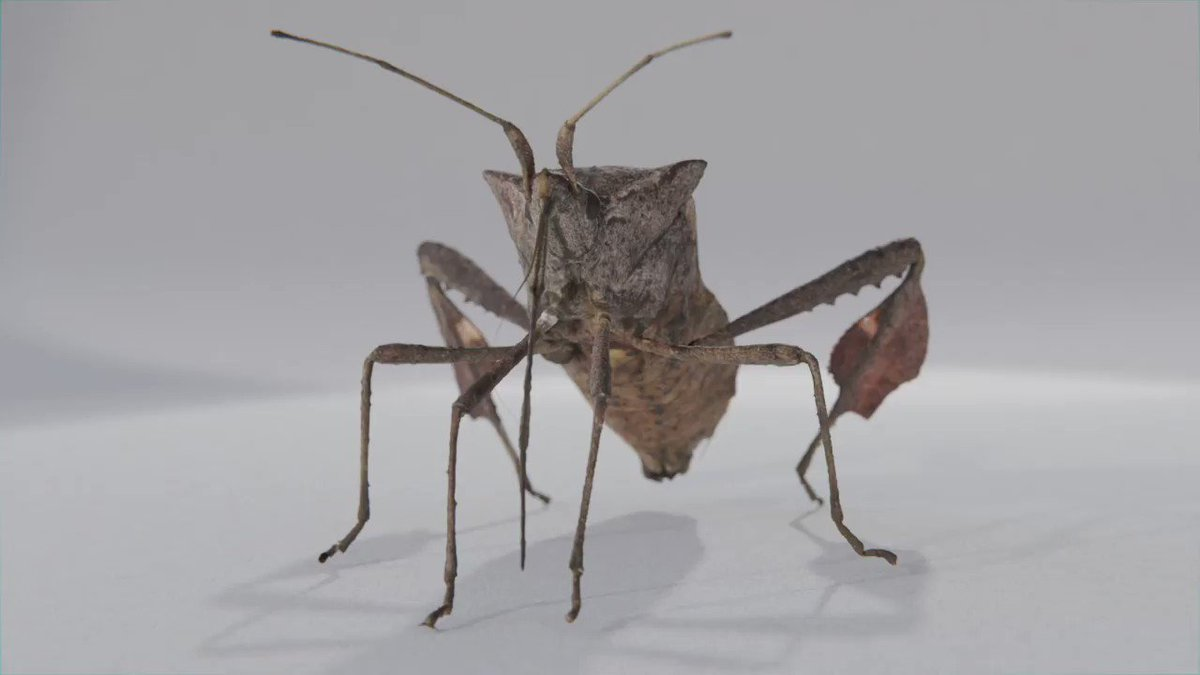 Image for the Tweet beginning: Insect enthusiasts: send us your