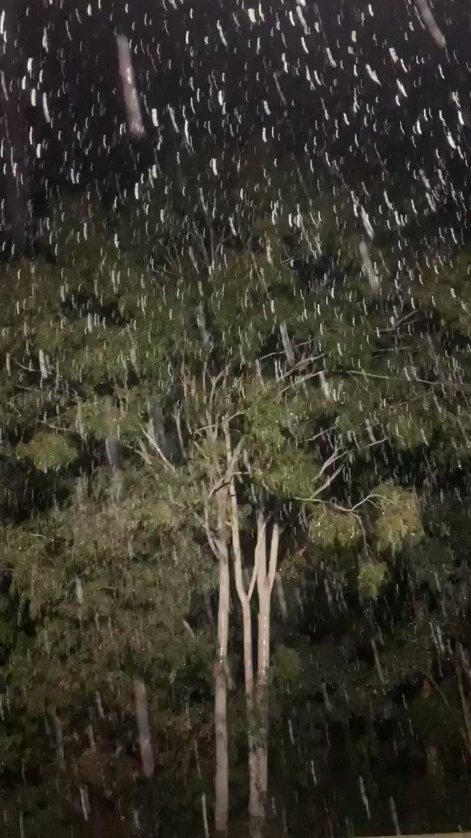 It was amazing to see something so beautiful in a world where it's hard to see much beauty at the moment. It was worth standing out in for half an hour. So was the hot bath afterwards. #healesville  #auspol #snow https://t.co/U7fRa2C2r3