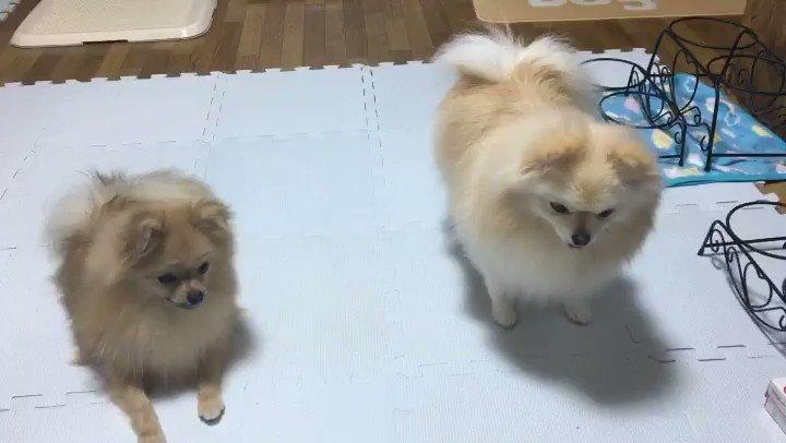 RT @SHINTARO0024: 我が家のブロッコリー大好き三姉妹が可愛いから見て欲しい https://t.co/Gw3faQbll7