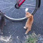 どんどん猫が寄ってくる!なぜか自転車に興味津々の猫たち!