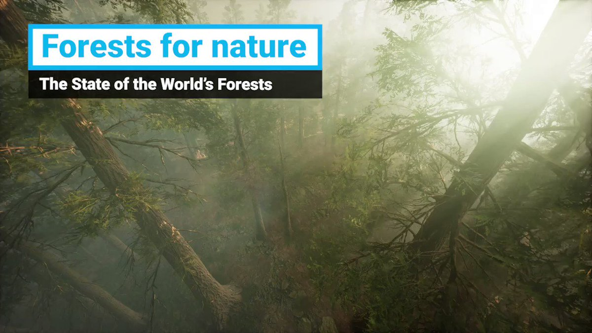 🌲Forests are the most diverse habitat on land, but deforestation, mainly due to agricultural expansion, threatens #biodiversity. #ForNature we must transform how we produce & consume food. 👉bit.ly/2KUo6by