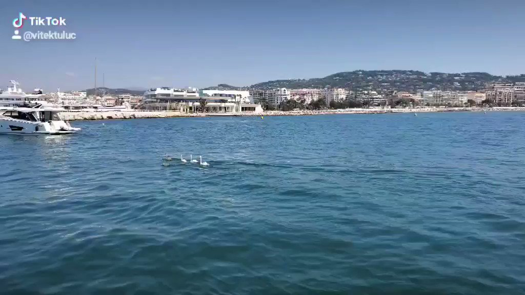 #sunday #day7 Watch a moment - a beautiful family of swans in Old port of Cannes// #vitektuluc #cannes2020 #IseeyouKate #Cannes  #vitek #tuluc #ironparadise #OldPortCannespic.twitter.com/JthxsC2nM0