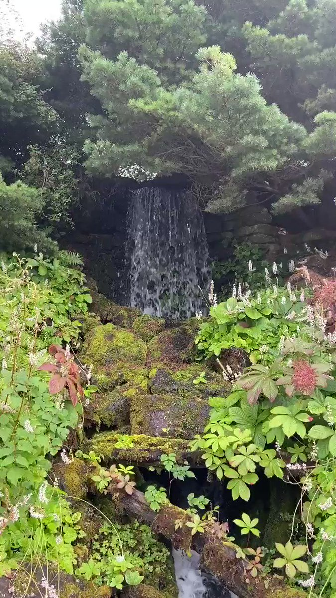 #Waterfalls are such a sense of wonder to me... I love 💓 nothing more than hearing the sound of water & instantly feel #relaxed 😌 Whilst #wandering @TheBotanics yesterday with @chancetotravel, we came across the #rockgarden and this!!! 🥰😍 #waterfallwednesday #Edinburgh #go