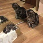 戸惑った様子が切ない?お気に入りの箱をとられてしまった猫ちゃんw