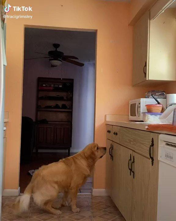 Caught.   Dogs, bruh... https://t.co/dWEr10dmjS