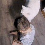 猫が子供を愛でる映像!まるで我が子のように接する猫ちゃん