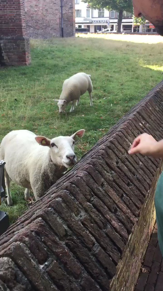 When the lamb feels left out because the mother gets all the attention #travel #animals #sheep #attentionseeker #simpleliving https://t.co/3jsUUj9Bwy