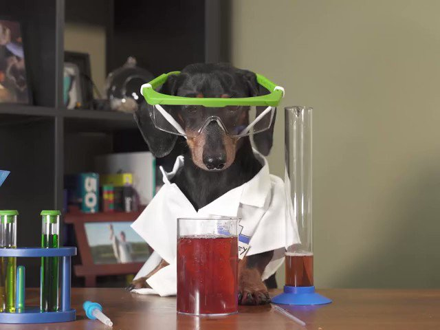 Where does the dog scientist spend her day? At the labrador-y!