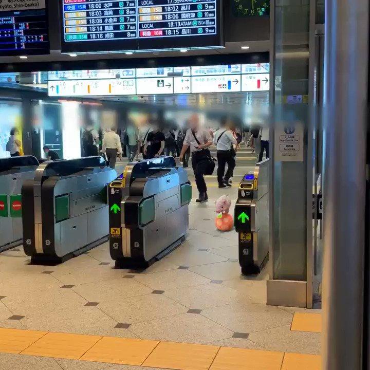 小豬過東京站 Xv-irE9URlrIeC3h