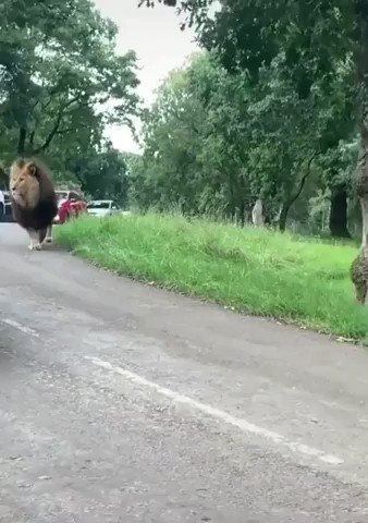 """""""Sorry honey,  I'm gonna be a little late today, you won't believe what happened when I was in traffic… """" https://t.co/2Pp44A4UDX"""