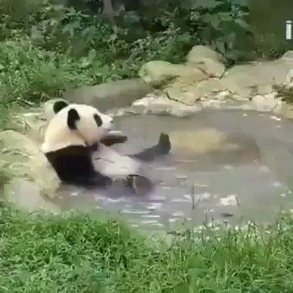 温泉でくつろいでるときのパンダさんが、露天風呂に入ったとき、思いのほか空いていたことに気を良くして童心に戻りウキウキで妙な動きをしてる、そこらへんにいる俺らと完全に一致