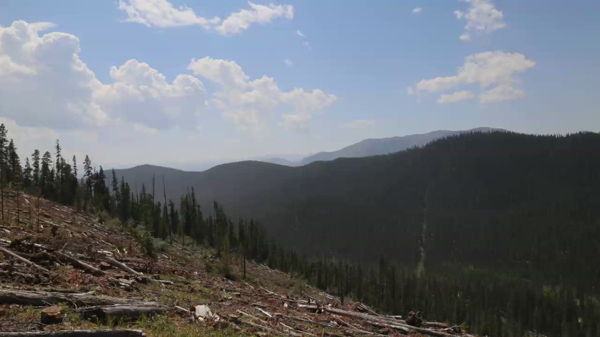 The numbers are in! AFPA members have planted 87 MILLION trees this year.🙌🌲🌲 Strong planting practices like these help ensure that Alberta's forests will be around for generations. #loveabforests #forestsforthefuture https://t.co/7oAwzGjdRl