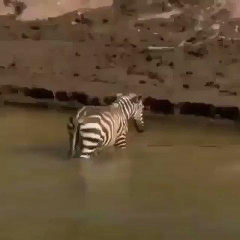 Crocodile says GOD FUCKING DAMN IT
