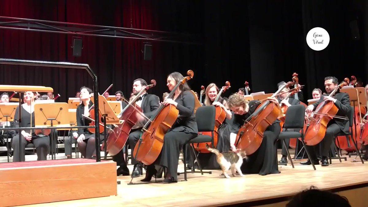 迷い込んだ野良猫がステージに上がって全く降りず、指揮台にまで上がるも観客や楽団員も気にせずそのままコンサートを始めるイスタンブールのオーケストラと特等席で演奏を聴いていった猫