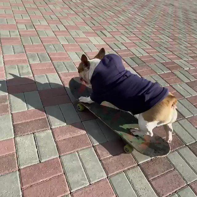 Yeni aldığı kay kayla mahallede hava atan köpek gibi köpek  https://t.co/t5HYwCU8Mb
