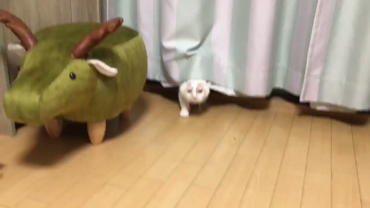 秋の虫の声とホイちゃんの声のハーモニー