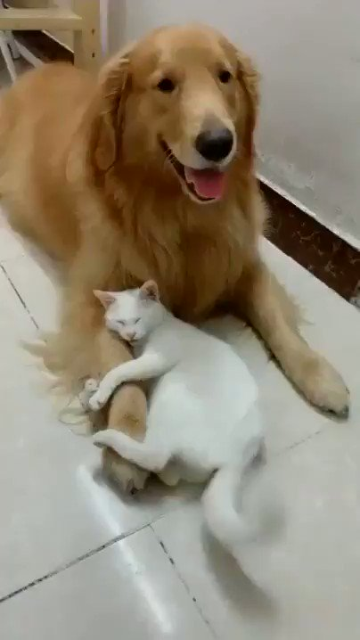 Don't touch my friend human !!😨🐶😼 ( Imgur/Gallery ) 🎥 via @myworld2121
