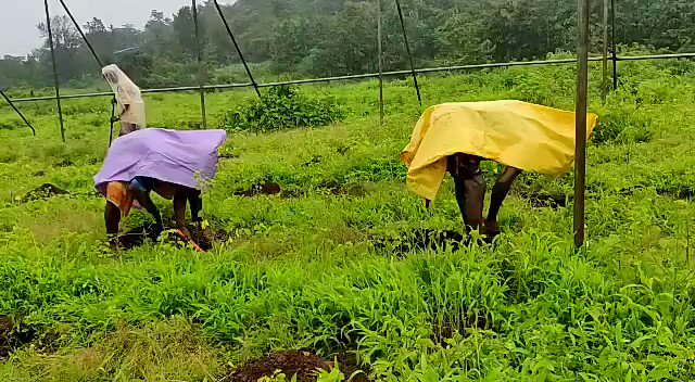 We have employed a large number of villagers and tribals who were otherwise unemployed due to the lockdown situations around.  @thetreeboxtweet @rotarydist3141 👍 https://t.co/cwEyzQdngr