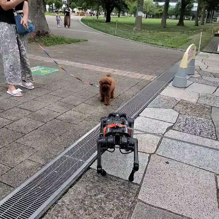 念願のわんちゃんとの対面w #A1犬屋敷