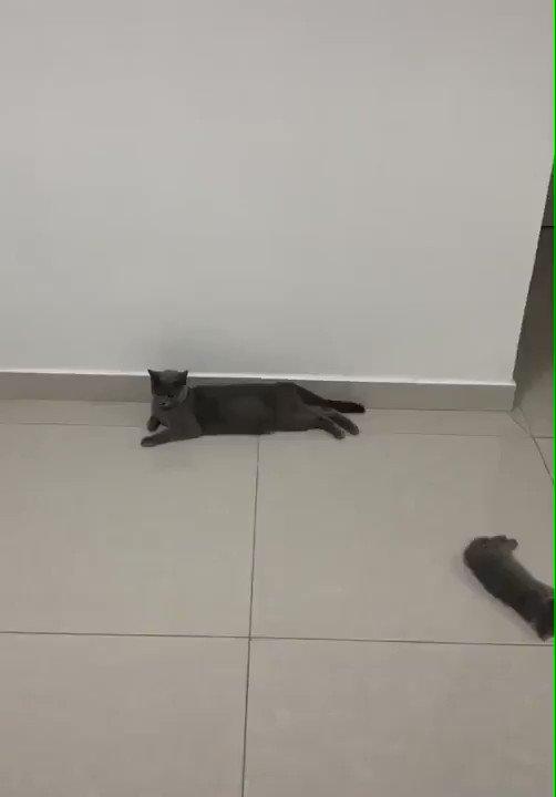 「親ネコと床に散らばる子ネコ」Mother cat  littering all over the floor  何があったんだw