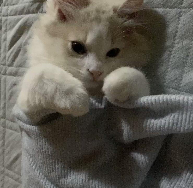 僕の隣で一緒に寝よう?😴#猫