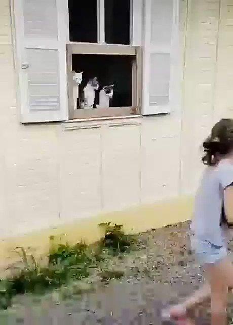 Spectator cats. https://t.co/JVNWAVHRF7