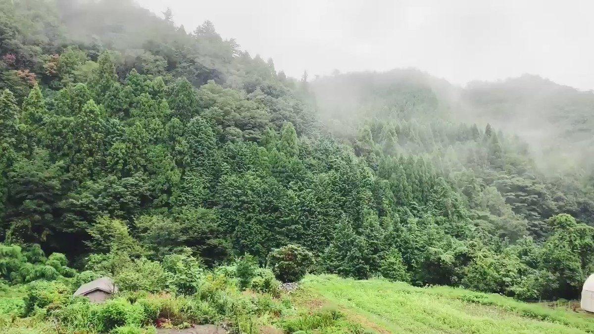 雨と湿った土の匂い