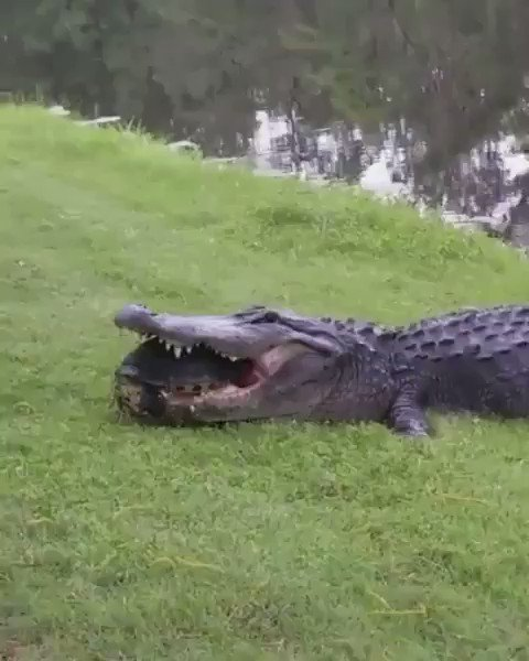 "Turtle said ""see ya later alligator"" 😭 https://t.co/Db6945wZYD"