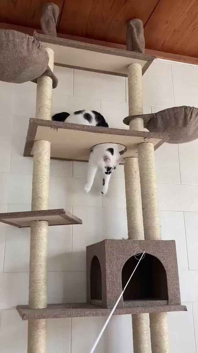 猫じゃらしに集中しすぎた結果、下半身の存在を忘れた人#熱海 #BAR #猫 #Cat