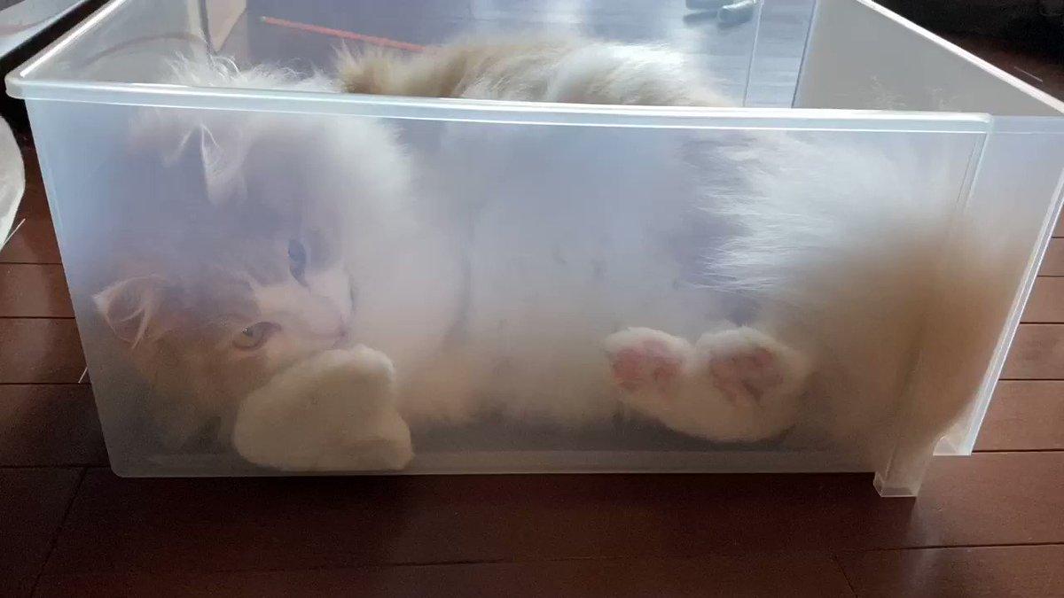 クリアケース猫