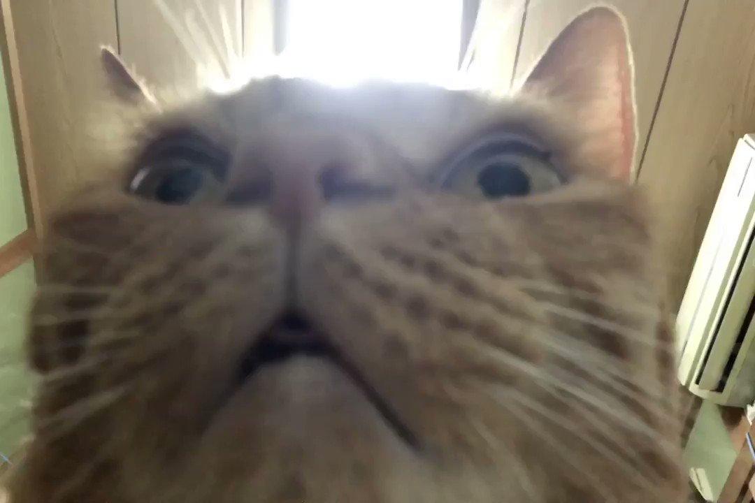 ネコはどんな角度から見てもカワイイという説を覆した。 #ねこ #猫のいる暮らし