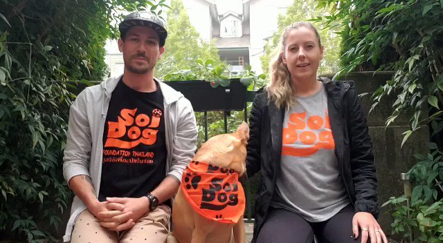 Mutt March: Shake it Off starts today ❣️ https://t.co/jkvCjvq9tZ  Dave & Nicole, former volunteers at Soi Dog Phuket shelter & furparents to rescues Wanchan & Mango encourages all to take part in @SoiDogCanada worldwide virtual fundraising event❗ #SDCanada2020  #SundayMotivation https://t.co/MZlWHCp1AC