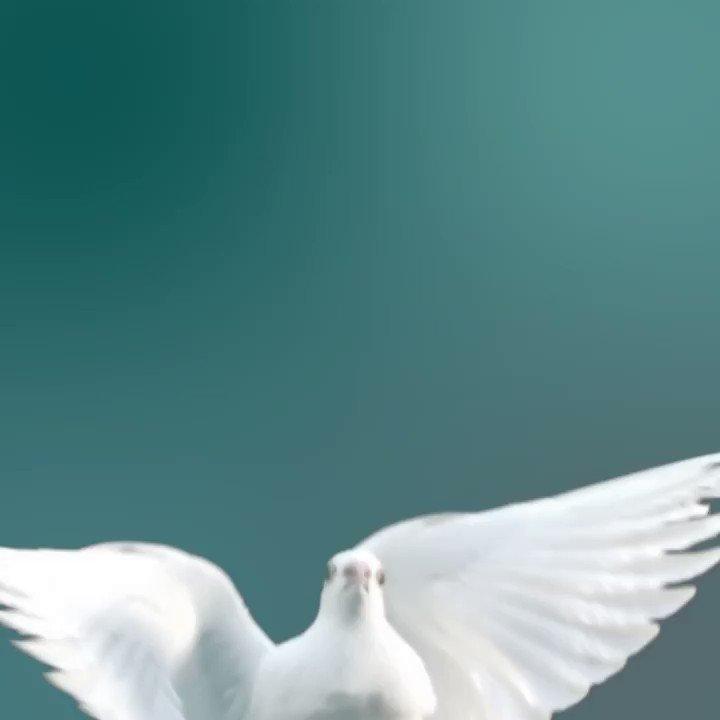 Le Canada est heureux de collaborer avec ses partenaires à travers le monde afin de favoriser un monde plus pacifique. 🕊️  Lire notre déclaration sur la #JournéeInternationaledelaPaix ➡️https://t.co/w4BOwKEC1v https://t.co/g2zTRqcooD