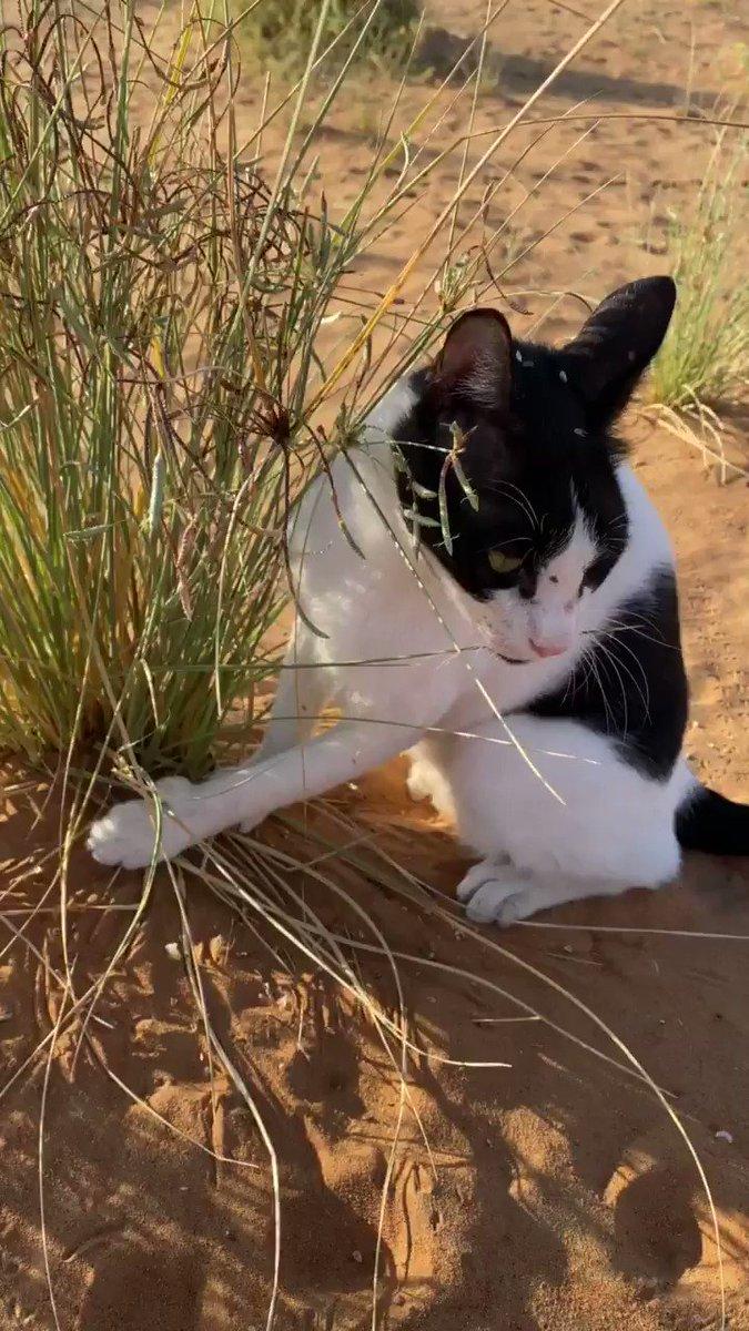 ニャゴニャゴ言っている声がしたので来てみたら、草に手が引っかかってカリカリしているちょびさんだった(助けようと手を出そうものなら余計なことしないで!と理不尽に叱られる)。