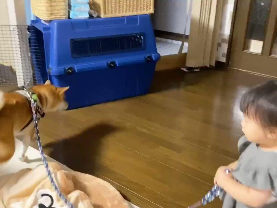 お散歩GOGO!