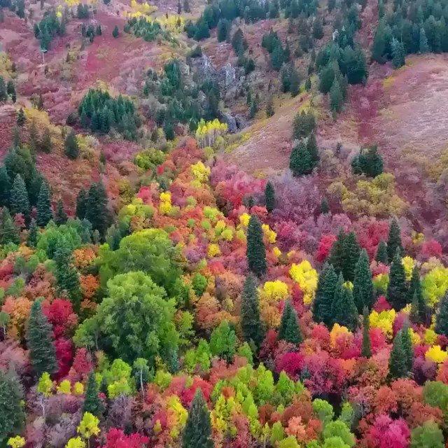 色鮮やかな風景でございますね。