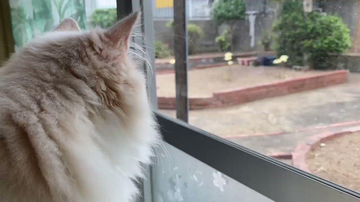 綺麗になった庭をニャルソック中です🥳#猫